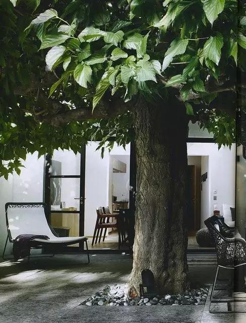 农村树的造型设计