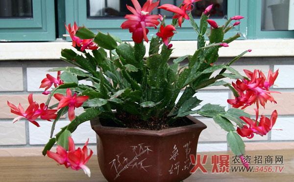 臥室適合養什么花,適合養在臥室的植物