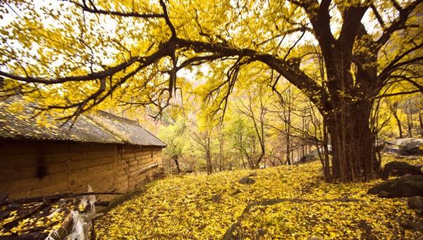 村域内的龙池曼风景区,地跨黄河,淮河,长江三大流域,是世界地质公园